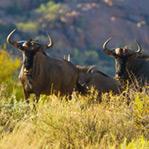 Photographic Safaris >>>